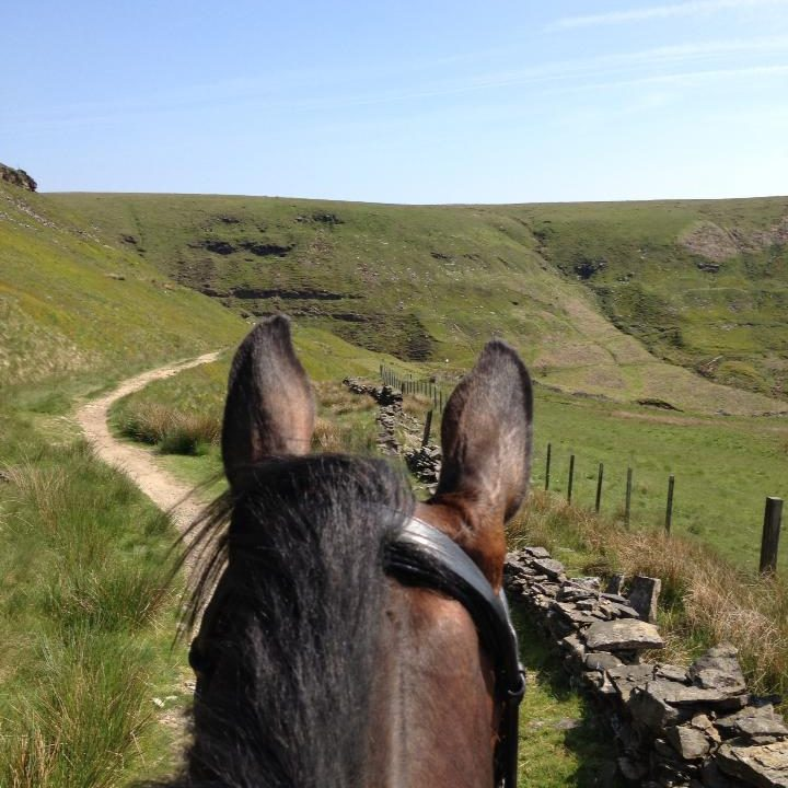 horse riding lessons school