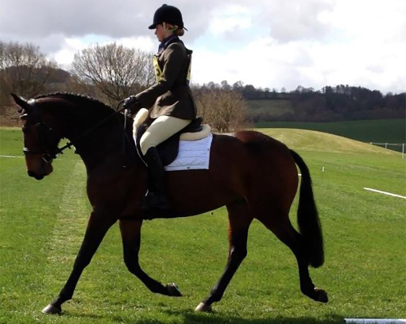 Cavalli-horse-for-sale