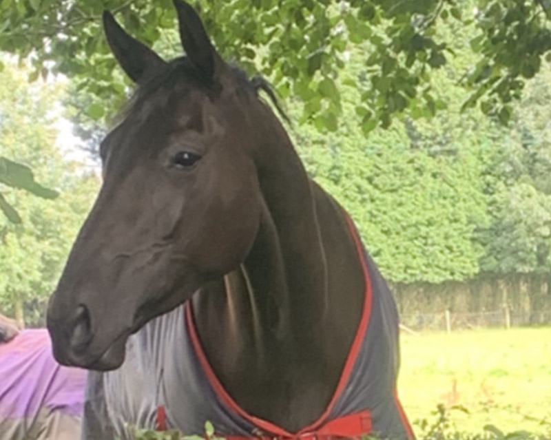Floris-Tn-(Quality-Times)-horse