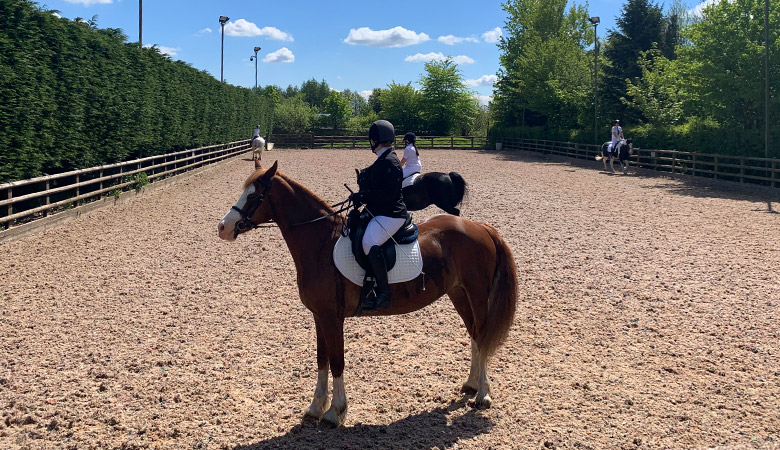 horses-for-sale-bolton